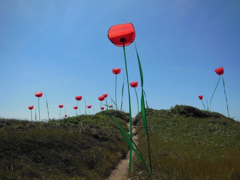 Poppies of Penvins