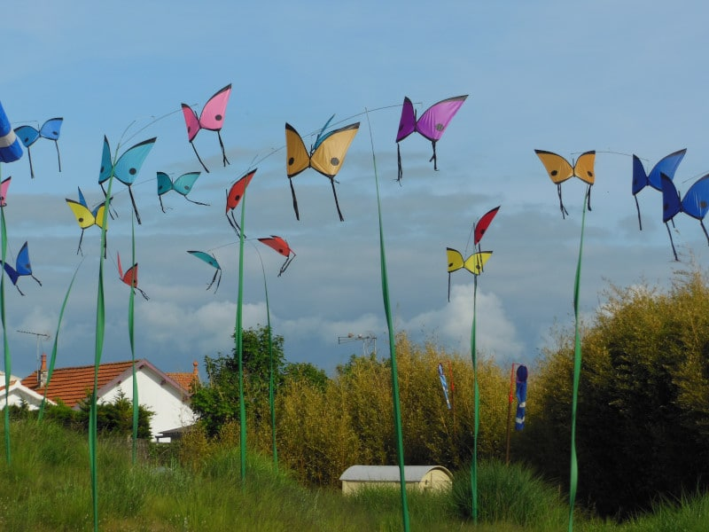Morpho butterflies in the wind garden