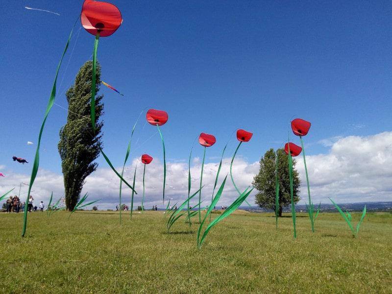 Festival du vent et du Vol Libre en Occitanie