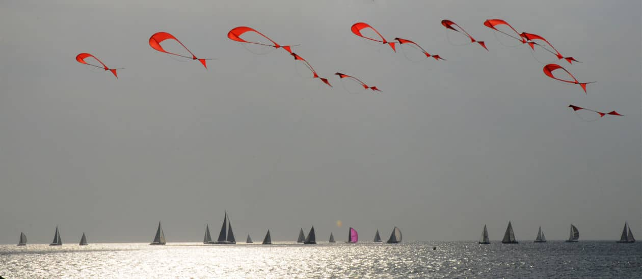 kite, shoal of Fish at Marseille