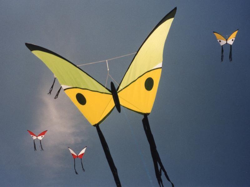Cerf-Volant Papillon Morpho