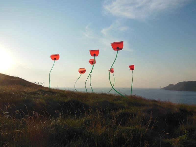 Cerfs-Volants Coquelicots dans le Cotentin