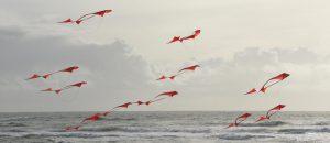 Shoal of Fish, kite