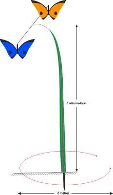 nuée_de_papillons_FT
